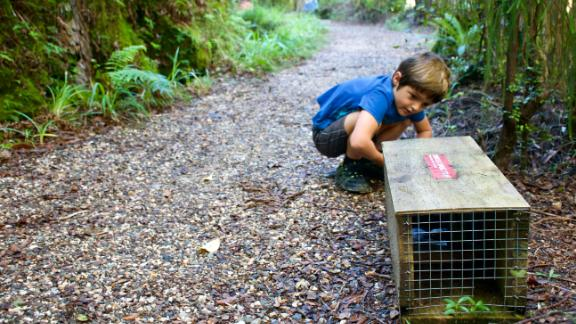 Community groups are actively involved in trapping New Zealand