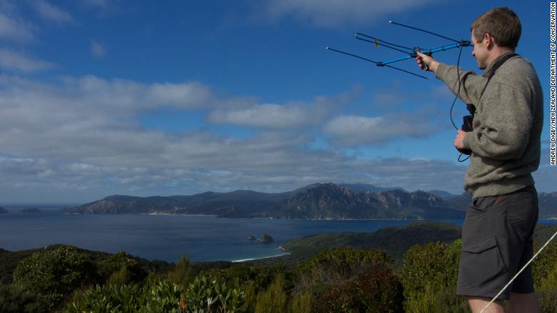 Andrew Digby uses an aerial to monitor birds on Whenua Hou.