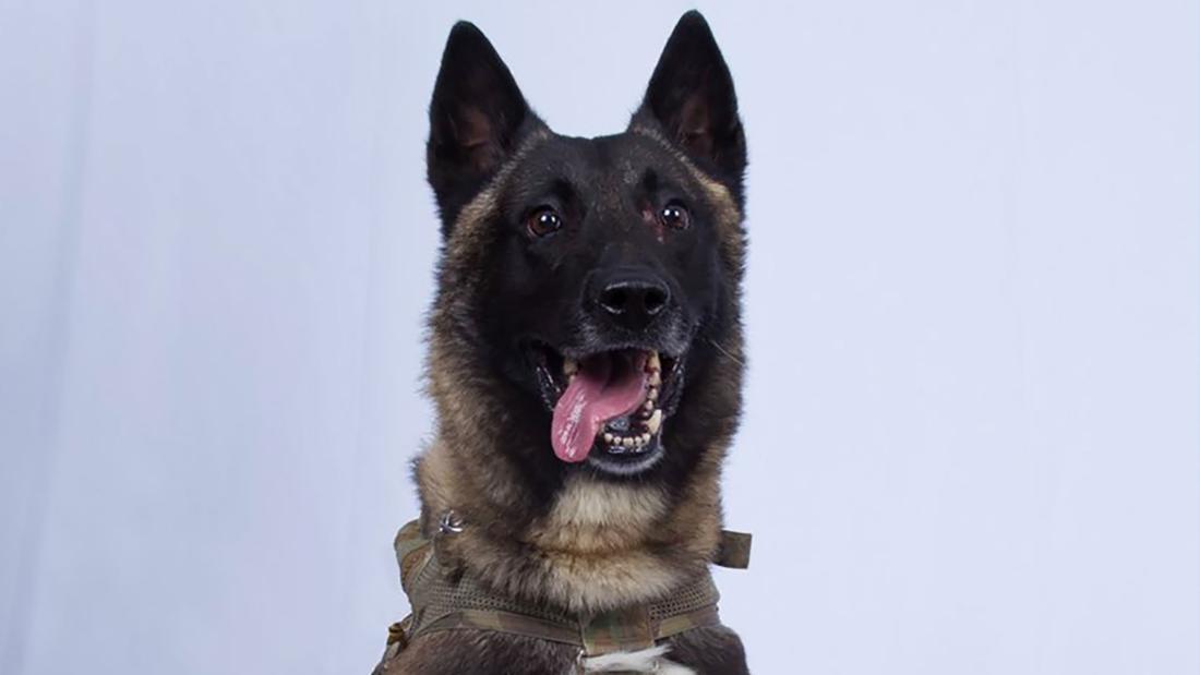Trump shares image of dog hurt in raid