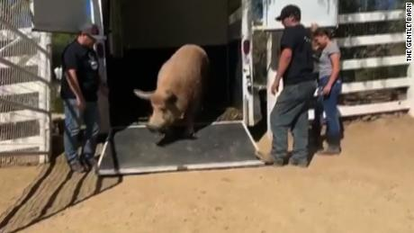 Animals evacuated from wildfire have happy ending