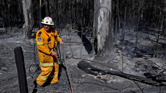 72 bush and grass fires are ablaze in the state, which is home to a koala breeding hotspot, experts say.