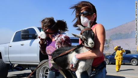 Laura Horwitz (R) and Robin Phipps help rescue goats from a ranch nearby to the Reagan Presidential Library in Simi Valley.