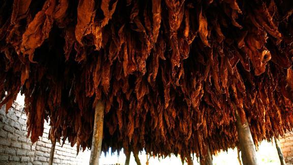 Tobacco, Malawi