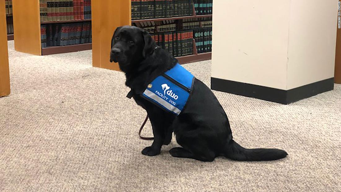 Lab vereidigt als Unterstützung Hund für trauma-Opfer