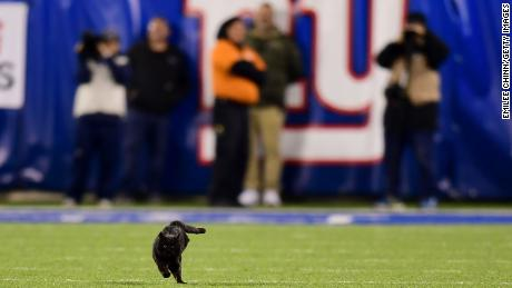 Black Cat Briefly Halts New York Giants Dallas Cowboys Game