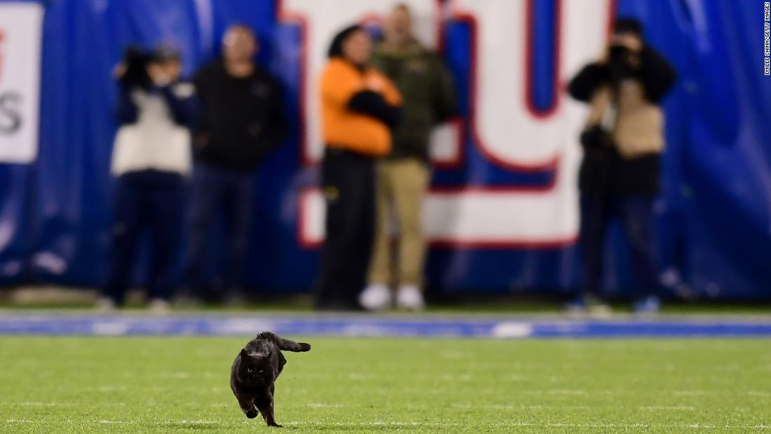 A black cat halted the Cowboys-Giants NFL game with a thrillingly furry touchdown