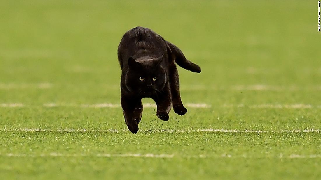 Cat Eilte NFL-Feld ist angekündigt als vorspeise