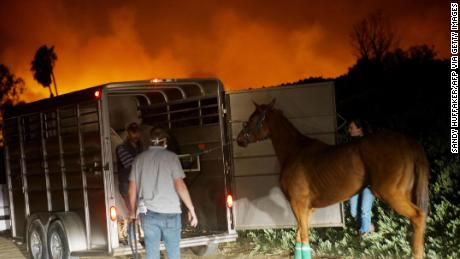 Volunteers rescue horses during the Lilac fire in Bonsall, California on December 7, 2017.