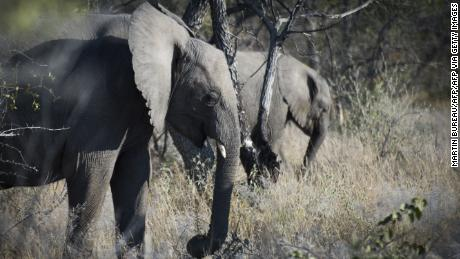 Elephants stand in 2015 in Namibia's Etosha National Park.