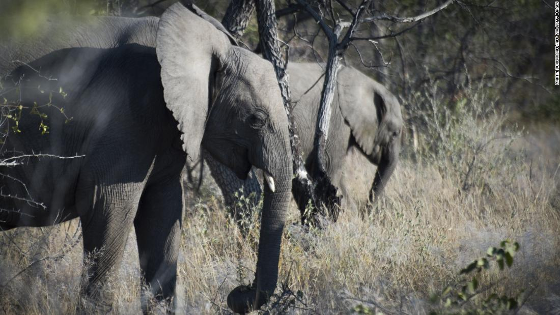 An Austrian tourist has been killed by an elephant in Namibia