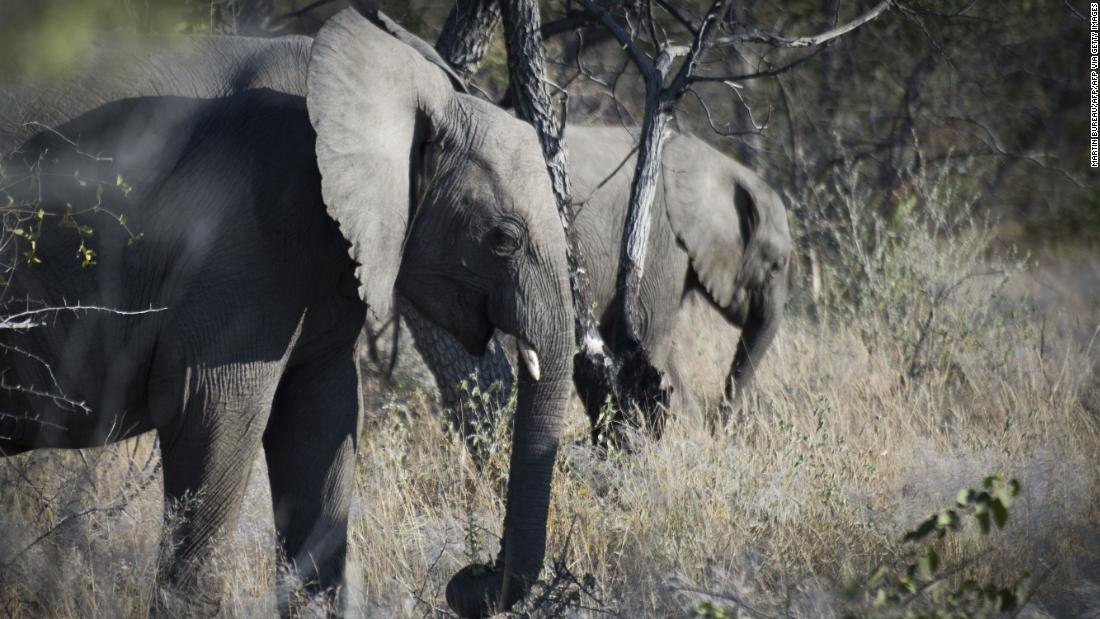 Tourist auf camping-Ausflug von Elefanten getötet