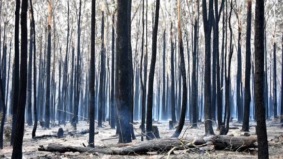 Burnt trees dot the landscape in Old Bar on November 10.