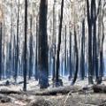 05 australia fires 1110
