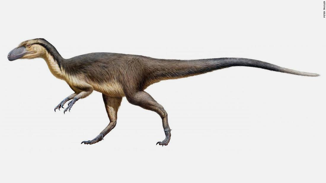 Fluffy dinosaurs used to live at the South Pole, scientists say