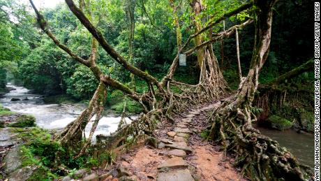 Root Bridge. (Photo by: JAYANTA KHAN/IndiaPictures/Universal Images Group via Getty Images)