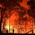 03 australia bushfires 1119 RESTRICTED