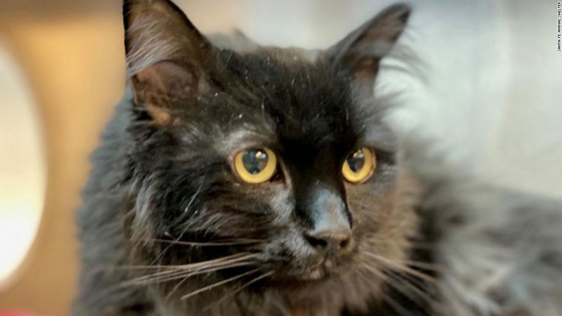 A cat missing for five years was found 1,200 miles away. He was just reunited with his owner