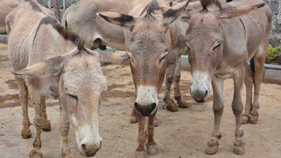 Chinese medicine's threat to donkeys