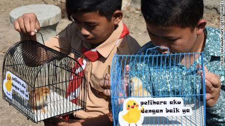 "Indonesian pupils look at chicks in cages with signs that read ""please take good care of me""."