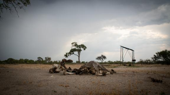 An elephant carcass in Hwange. A severe drought that has drained water sources in Zimbabwe's largest national park, resulting in a number of elephant deaths.