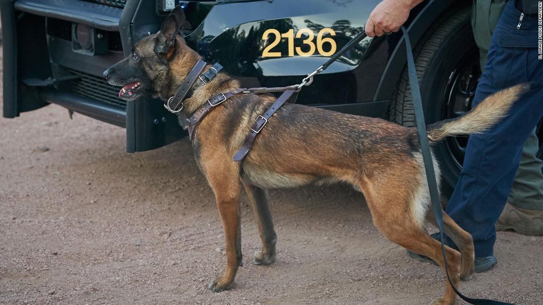Fliehende Person Polizei tötet Hund