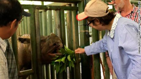 Sabah Deputy Chief Minister Christina Liew visited Iman the Sumatran rhino in August.