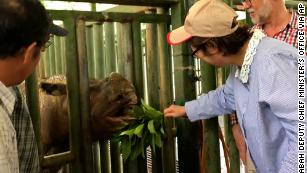 The last Sumatran rhino in Malaysia has died and there are less than 80 left in the world