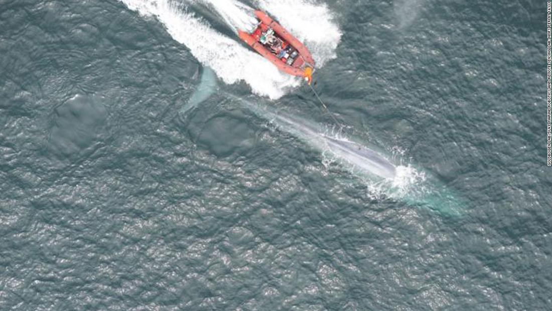 Ein Blauwal Herzschlag aufgezeichnet wurde, zum ersten mal, und die Ergebnisse sind faszinierend