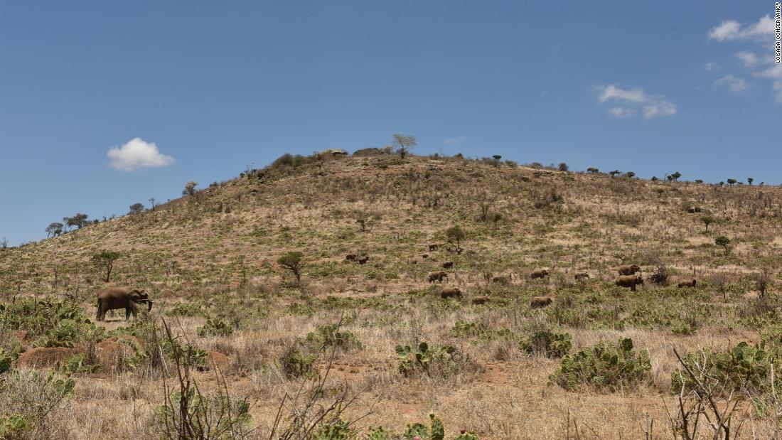 <strong>An invasion: </strong>The cactus has invaded more than 500 square kilometers of Laikipia County.