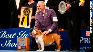 National Dog Show 2020.National Dog Show Winner Thor The Bulldog Takes Home Top