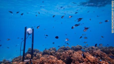 An underwater loudspeaker on a coral reef.