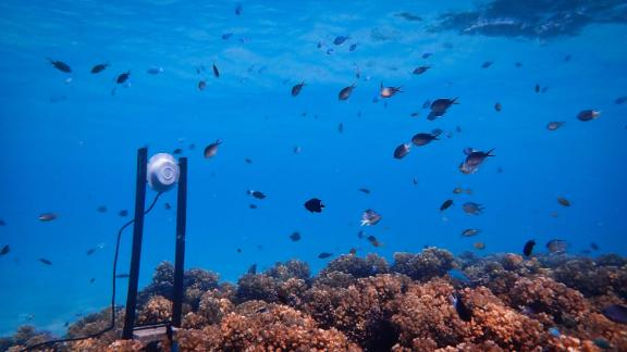 An underwater loudspeaker on a coral reef.