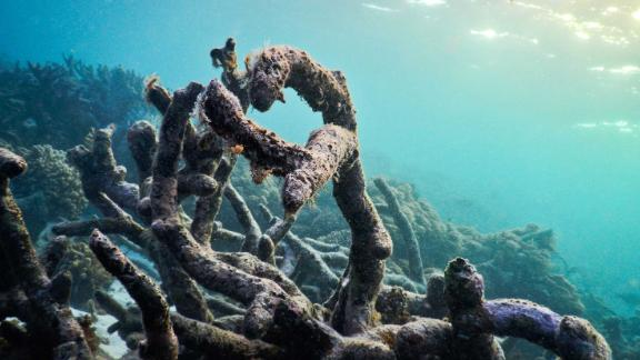 Dead coral rubble on the recently damaged Great Barrier Reef.
