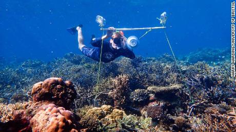 Researcher Tim Gordon deploys an underwater loudspeaker on a coral reef.
