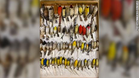 Some of the thousands of birds in the Field Museum's collections that collided with  windows in downtown Chicago.