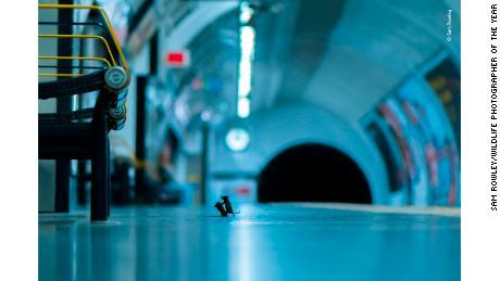 Fotografie myší hádajících se o nástupiště metra získává nejprestižnější ocenění za fotografii