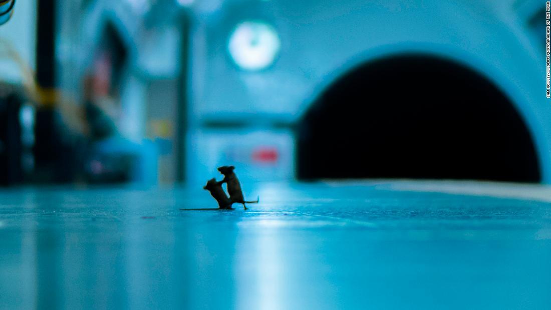 Photo of mice squabbling on subway platform wins prestigious photography award