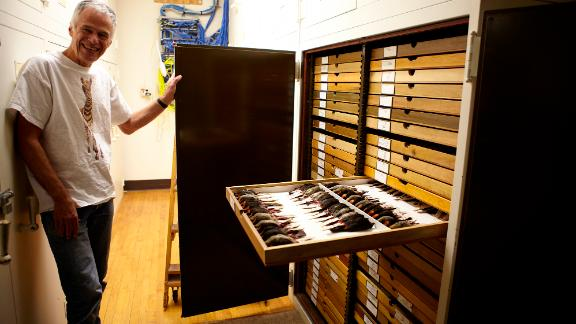 Dave Willard, the scientist who began collecting birds that crashed into Chicago buildings and measured all the specimens used in the study, in the Field Museum's collections.