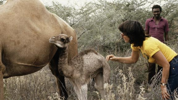 """Building on the success of songs like """"Blue Bayou"""" and """"Heat Wave,"""" Ronstadt -- seen here with a mother and baby camel during her African safari in Nairobi, Kenya in 1979 -- became a mega-star performing in sold-out arenas."""