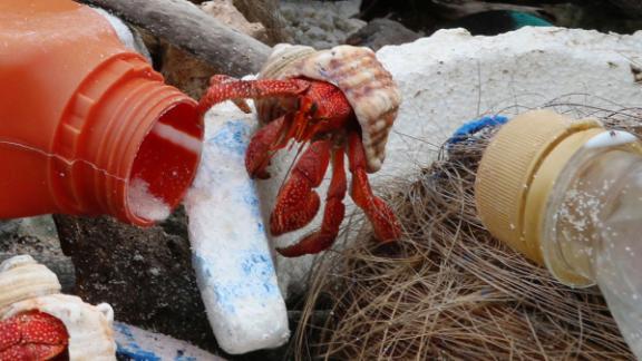 Hermit crabs with Cocos Island plastic debris.