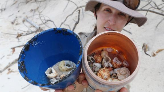 Dr Lavers found more than 500,000 Cocos Island hermit crabs in discarded plastic buckets.
