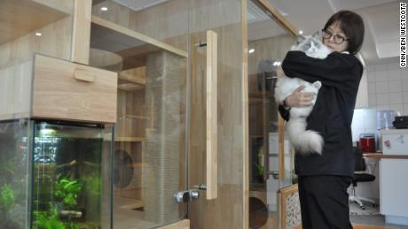 CatsVilla manager Zhao Siyu and her pet ragdoll cat in front of some of the specially-designed hotel rooms in Beijing.