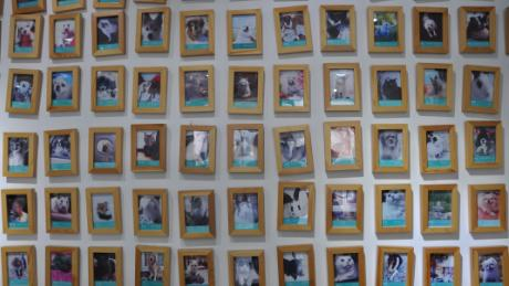Some of the pets for whom Li and Joypets have performed services over the past four years in Beijing.
