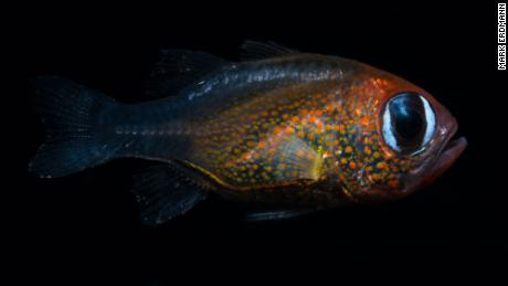 New Species 2020.2019 New Species Scientists Discovered 71 Here Are Some Of