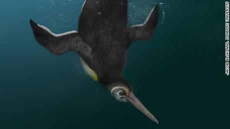 'Missing link' penguin fossil shows how they evolved after dinosaurs went extinct
