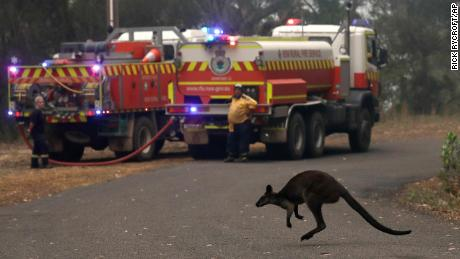 A wallaby hops across a road to flee a fire near Mangrove Mountain, north of Sydney, on Tuesday.