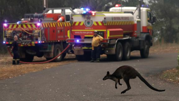 A wallaby flees a fire burning near Mangrove Mountain, north of Sydney, on December 10.