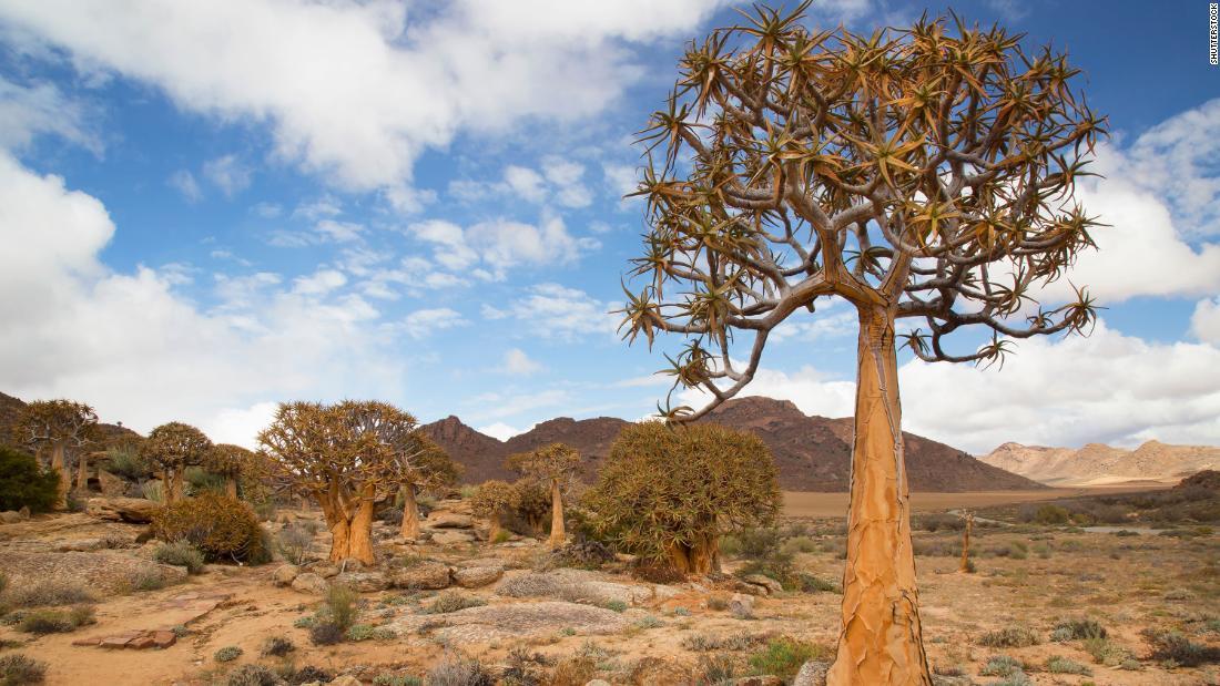 Αυτό το όμορφο έρημο είναι ανθισμένα με άγρια ζώα που δεν βρίσκονται πουθενά αλλού στη Γη