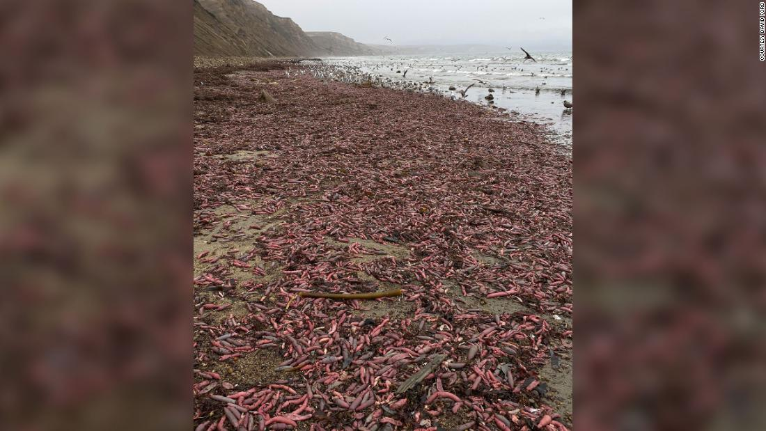 Thousands of chunky, squirming innkeeper worms washed up on a California beach