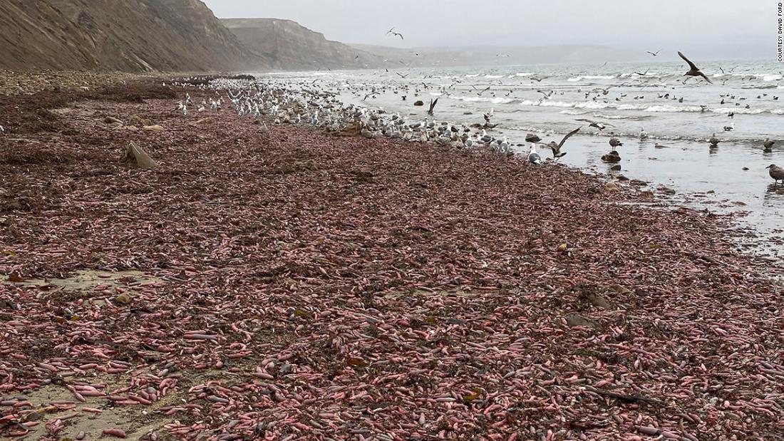 Χιλιάδες ογκώδες, ανήσυχα σκουλήκια ξεβράστηκε σε μια παραλία της Καλιφόρνια